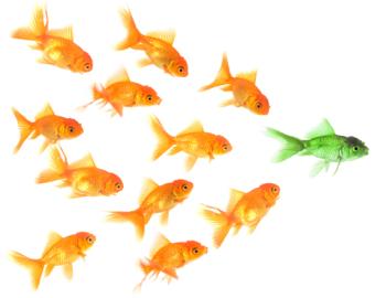 Goldfish350